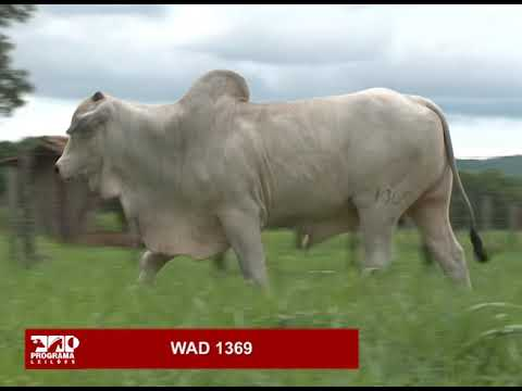 LOTE 81 - WAD 1369
