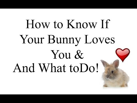 how to train your bunny to do tricks