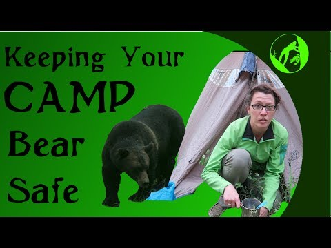 Keeping Your Camp Bear Safe