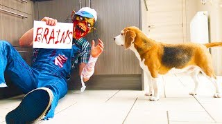 Zombie Vs Funny Dogs Prank : Cute Dogs Louie & Marie