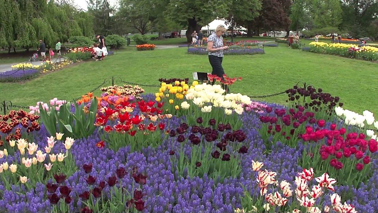 Albany Tulip Festival 2013