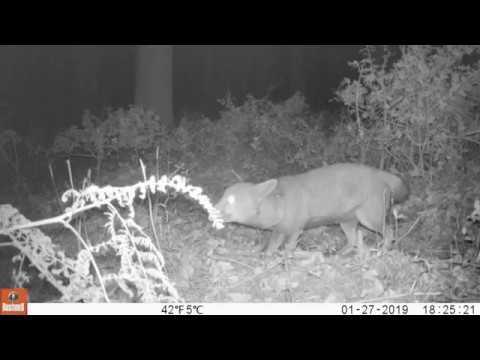Pom-Pom the Fox with half 'a tail.