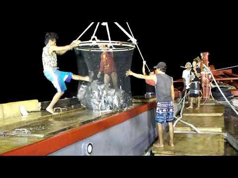 Hebat... Beginilah cara kerja nelayan indonesia menangkap ikan sekali tarik dapat belasan ton