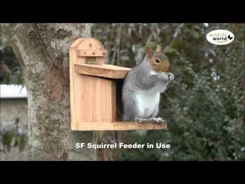 heavy-duty-squirrel-feeder