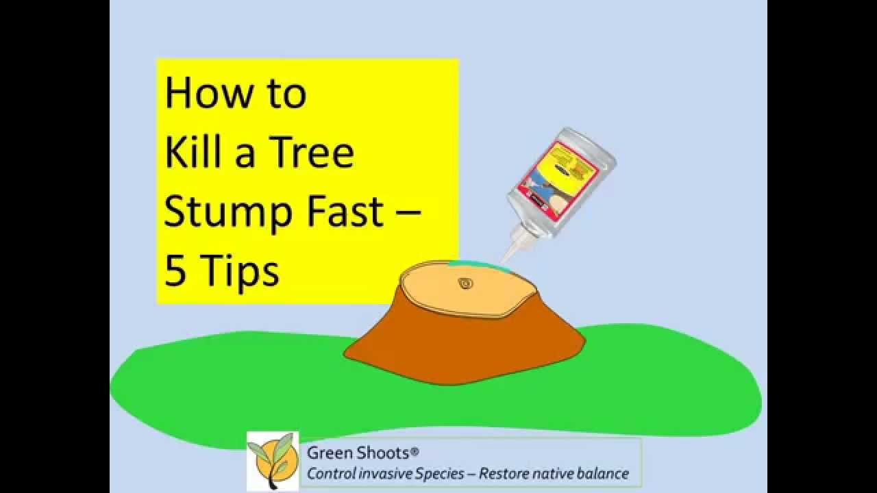 What can i use to kill a tree stump