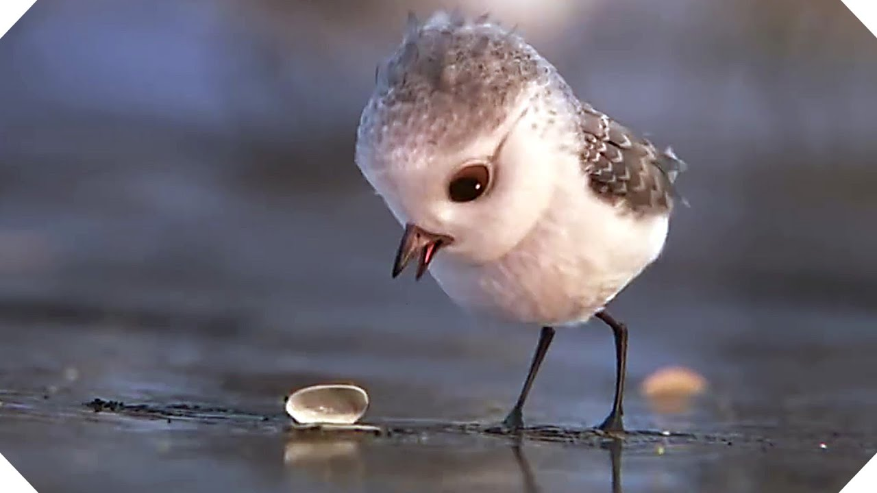 Dwnld Cute Little Bird Walpaper Free Fr Mobile: Disney Pixar Short (Animation Teaser