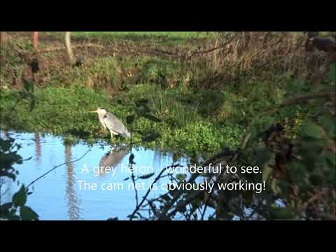Air Rifle Hunting & Pest Control - 2017 November