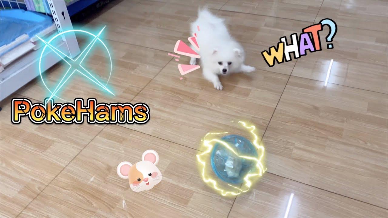 LoHa Pet Shop Giới thiệu các mẫu Banh Chạy cho chuột Hamster