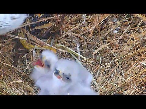 MNBound Eagles ~ Spirit & Scout Eat  ~ 04/09/15