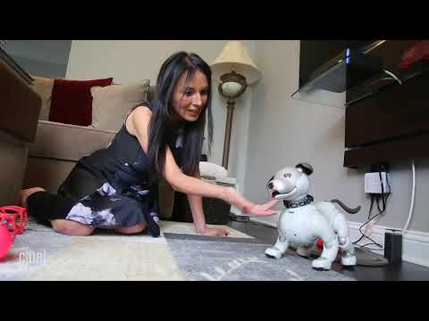 Why Do People Love the Sony Aibo Robot Dog?