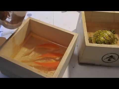 Art 3D Goldfish Painting Tutorial