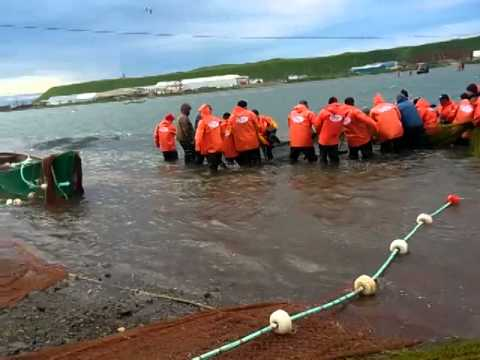 Рыбалка на Камчатке пос Озерновский