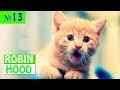 ПРИКОЛЫ 2017 с животными. Смешные Коты, Собаки, Попугаи // Funny Dogs Cats Compilation. Февраль №13
