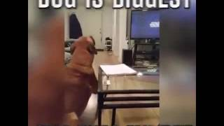 Dog is biggest star wars fan ever