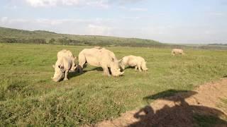 タンザニア セレンゲティ国立公園で出会ったサイ①