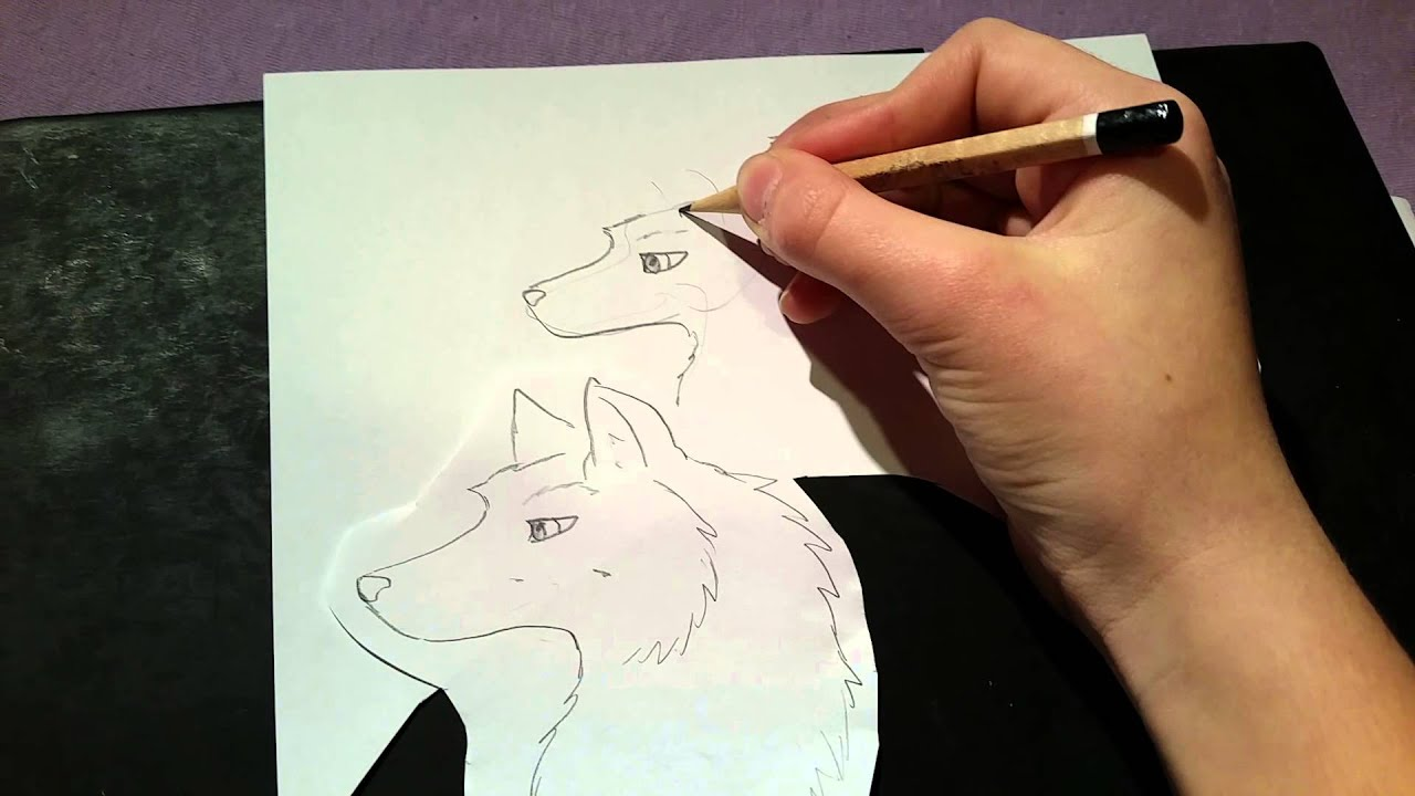 Comment dessiner un loup facile youtube - Dessin de loup simple ...