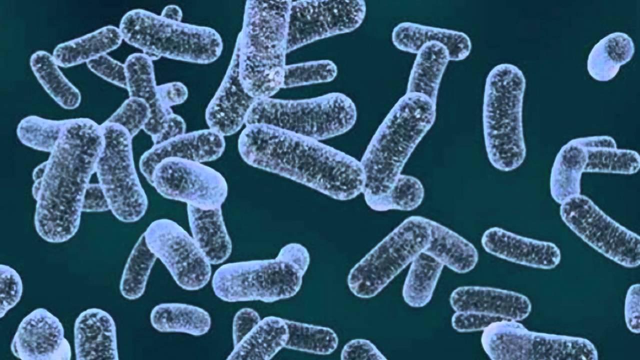 bacterii klebsiella)