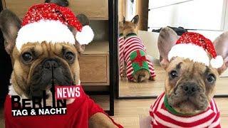 Diese BTN-Stars sind echte Hunde-Fans 🐶❤️#News | Berlin - Tag & Nacht