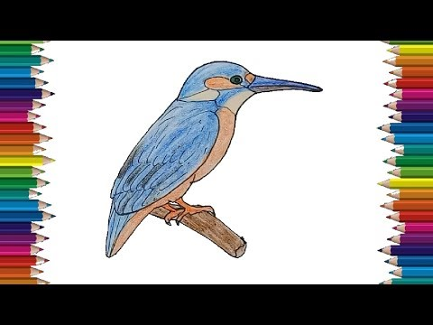 KingFisher Drawing And Coloring For Kids - How To Draw A KingFisher Bird Easy