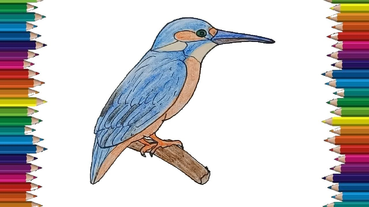 KingFisher drawing and coloring for kids - How to draw a ...