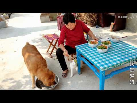 【我是趙姐】開飯了,看金毛狗狗和農村媽媽用的餐具,就已經讓網友笑的肚子疼