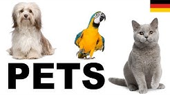 Lernen Sie englisch vokabeln - Haustiere 1 (Pets)