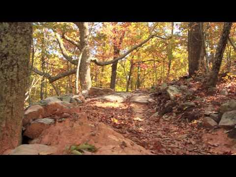 Mountain Biking Coldwater Mountain