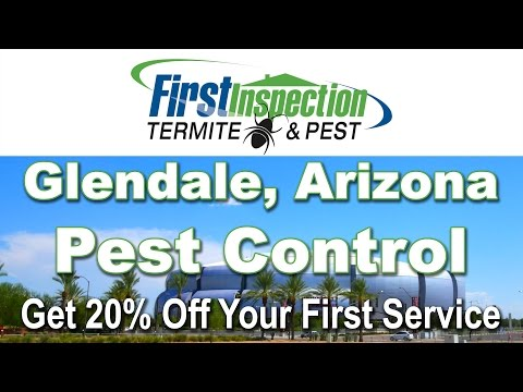 Termites Glendale AZ - First Inspection - Pest Control