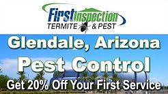 Termites Glendale AZ - First Inspection - Pest Control
