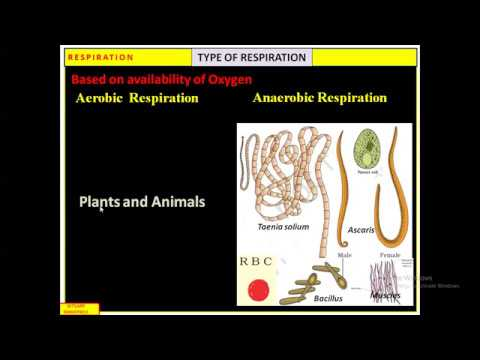 TYPES OF RESPIRATION STRUCTURE OF ATP (ONLINE LECTURE ...