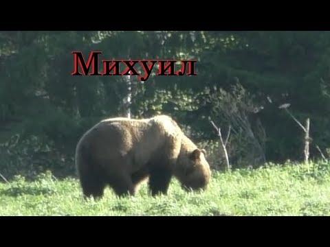 Вопрос: Вы можете разъяснить, почему хозяин тайги был назван медведь?