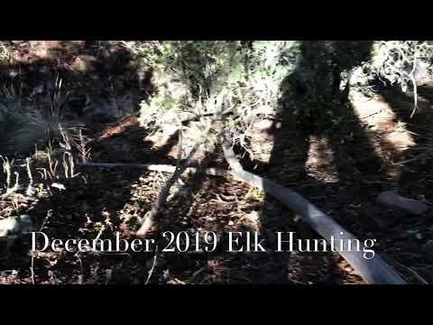 Elk Hunting San Carlos,Az Reservation