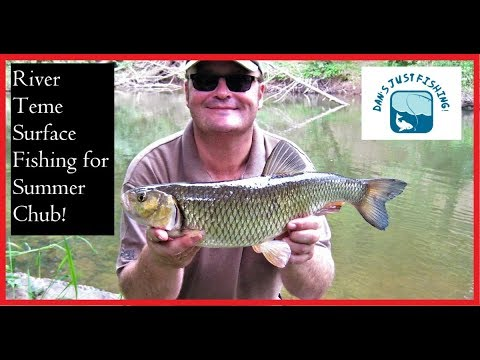 River Teme Surface Fishing For Summer Chub!