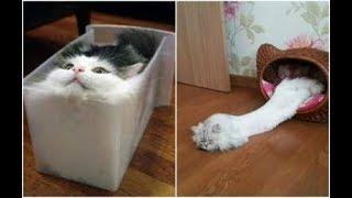 КОШКИ 2020 Смешные коты приколы с котами до слез  Смешные кошки  Funny Cats