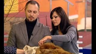 Двор на Субботней: одежда для собак