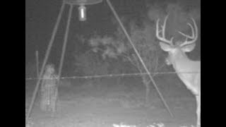 NEW ANGLE - 24/7 - Live Animal Cam w/ Night Vision - Live Stream in the Backyard GHOST CAM