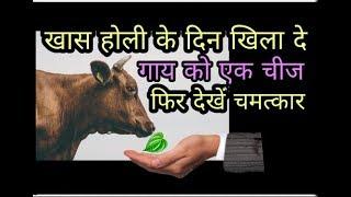Vastu shastra रातो रात चमक जाएगी किस्मत होली के दिन खिला दे गाय को एक चीज और देखें असर