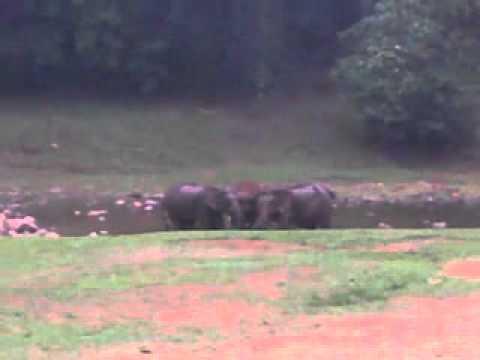 Wild elephants find mineral underwater