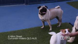 Gold Coast Pet Resorts Pet Care in Gold Coast for Pet Boarding and Pet Sitting