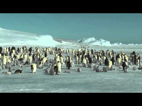 Emperor Penguins and Antarctic Peninsula