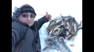 ВЕДРО ОКУНЕЙ ЗА ЧАС РЫБАЛКИ. Ловля рыбы на балансир и ратлин. Часть 2. Perch fishing.