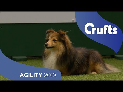 Agility Championship Round 1 – Jumping - Small | Crufts 2019