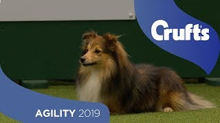 Agility Championship Round 1 – Jumping  Small | Crufts 2019