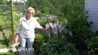 Секреты выращивания хосты: делимся опытом(, 2011-09-28T16:23:15.000Z)