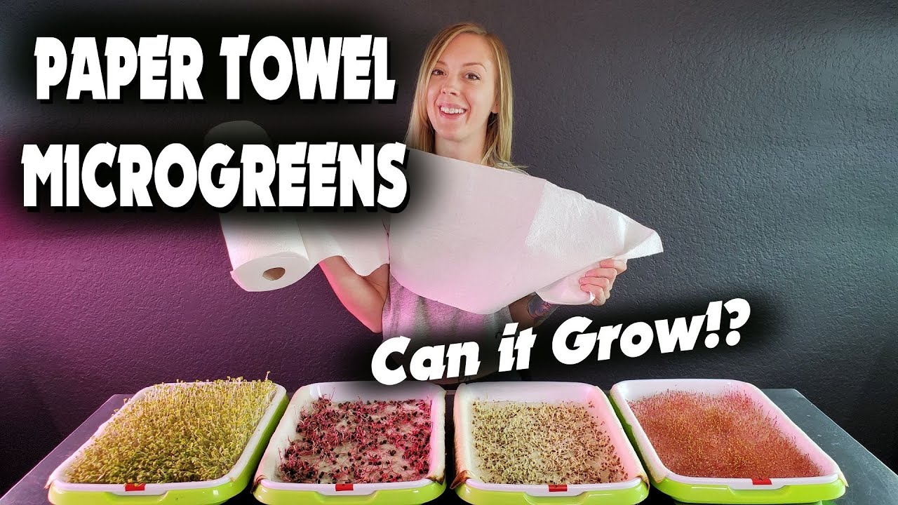 Microgreen PAPER TOWEL Germination Experiment - Can It Grow!?