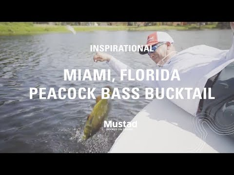 Fishing For Bedding Peacock Bass Using White Bucktails | Mustad Fishing
