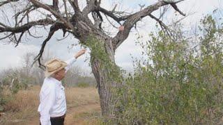 Ranchero texano demanda a Patrulla Fronteriza por instalar una cámara en su propiedad