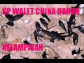 Sp Walet China Baronsai  Mp3 - Mp4 Download