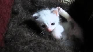 Сиротка котенок засыпает