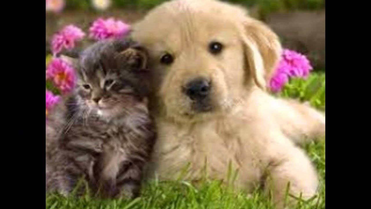 Puppies And Kittens Cuddling